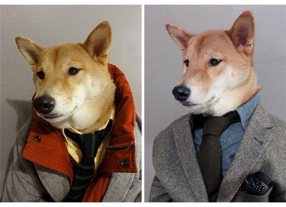 Bodhi, il cane di NY che è diventato un top model di abbigliamento maschile (5)
