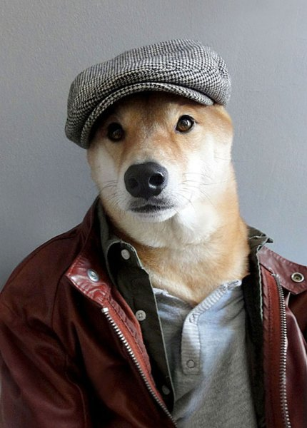 Bodhi, il cane di NY che è diventato un top model di abbigliamento maschile (2)