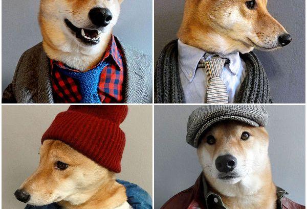Bodhi, il cane di NY che è diventato un top model di abbigliamento maschile (3)