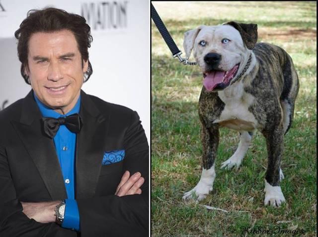 Boof, il cane sosia di John Travolta (1)