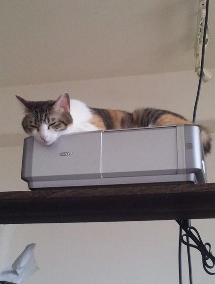 Azienda giapponese riempie l'ufficio di gatti per far rilassare i dipendenti (3)