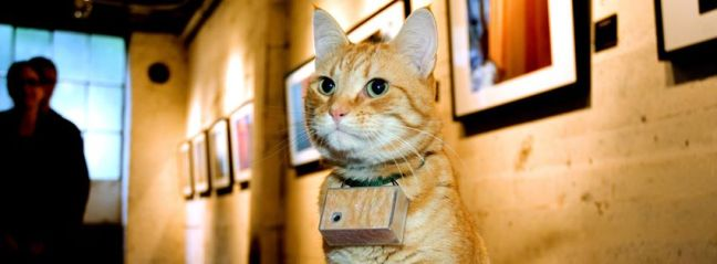 10 gatti famosi di internet