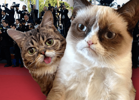 10 gatti famosi su internet