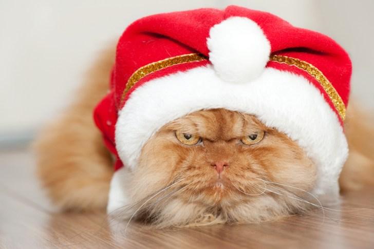 Foto di gatti a Natale, un'accoppiata non sempre vincente