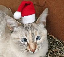 gatto strabico3