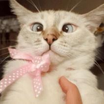 gatto strabico6