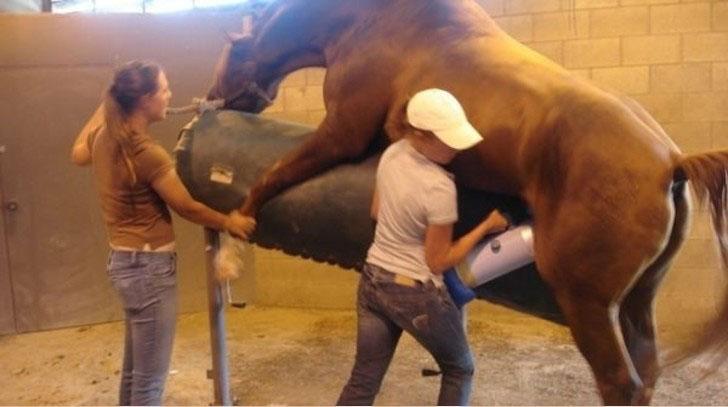Lavori peggiori del mondo: masturbatore professionale di animali