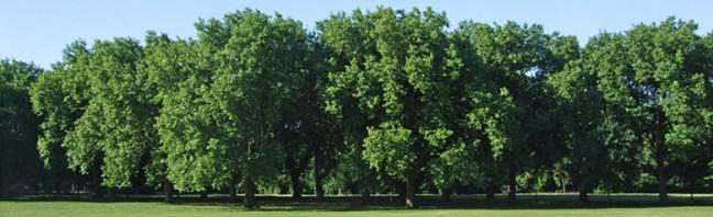 londra-alberi