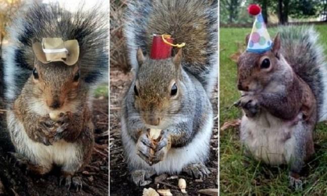 sneezy-scoiattolo-cappellino