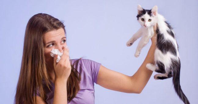 gatti-allergici-umani
