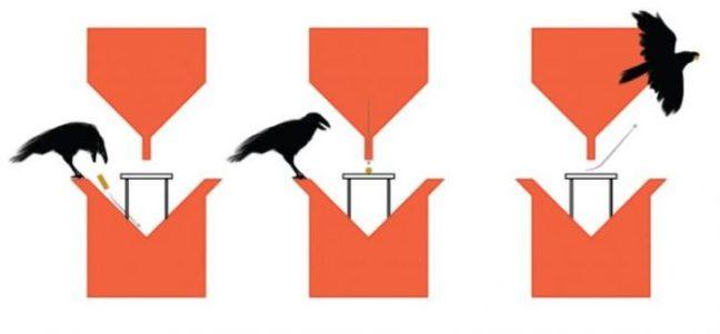 corvi-mozziconi-sigaretta