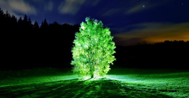 alberi-che-si-illuminano