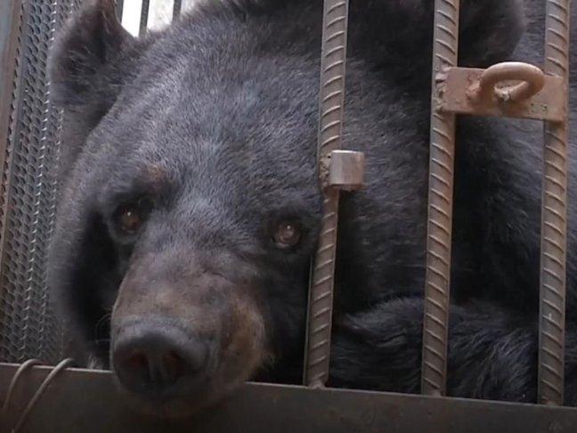 scambiano-cane-per-orso