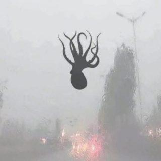 Cina, piovono creature marine dal cielo