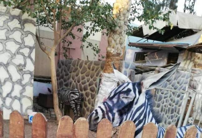 zoo-asini-per-zebre