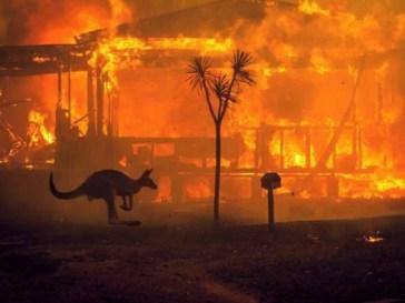 Avustralya Yangını absurdizi.com