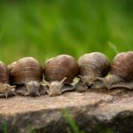 How To Start Snail Farming In Kenya (Africa)  And Make Money