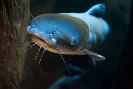 How To Start A Profitable Catfish Farming Business In Kenya [A-Z Guide]