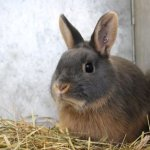 Start Lucrative Rabbit Farming Business In Kenya [Step By Step Guide]