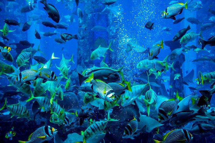Dubai acquarium