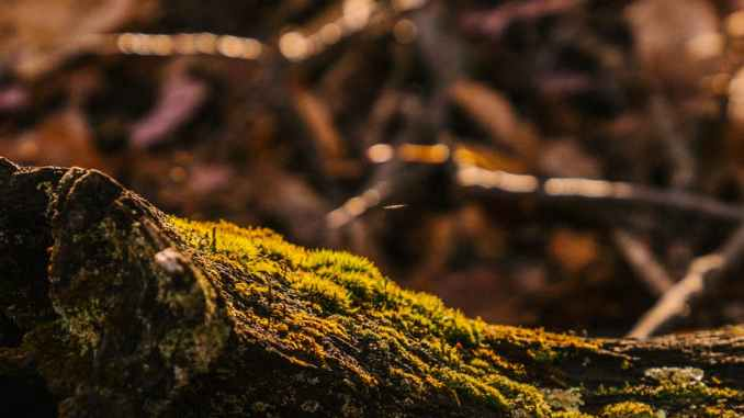 tree trunk with moss in autumn forest