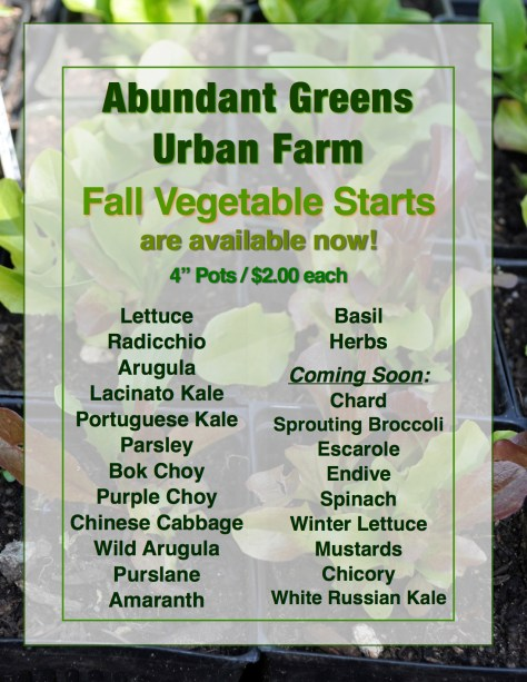 Fall Vegetable Starts 2015 JPEG