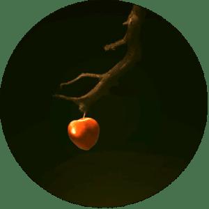 apple cicle