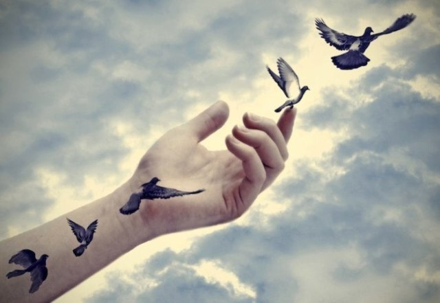 birds flying free