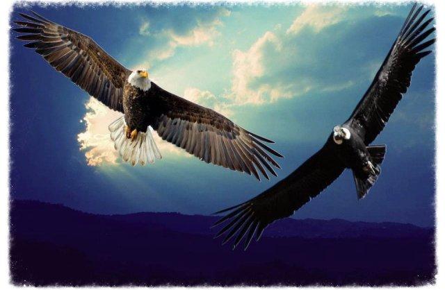 Condor+Eagle