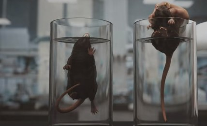 pokus krysy poselství