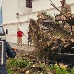 Ventania derruba três árvores em rua, carro, padaria e deixa nove em situação de risco