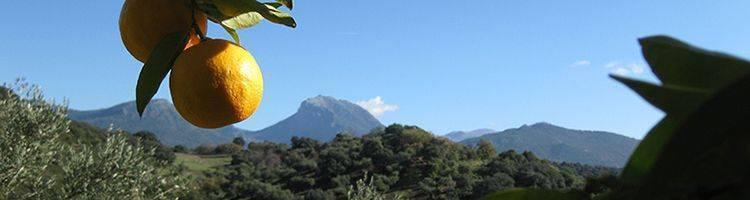 Natural Park Sierra de Grazalema Prado del Rey