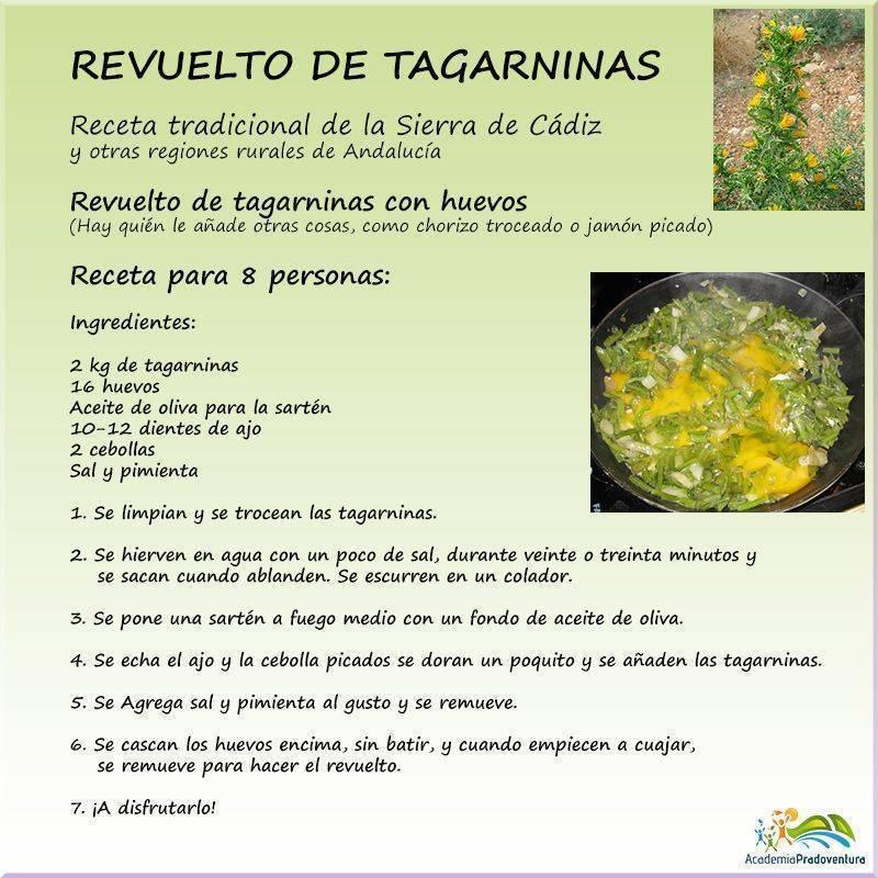 Receta revuelto de tagarninas de la Sierra de Cádiz