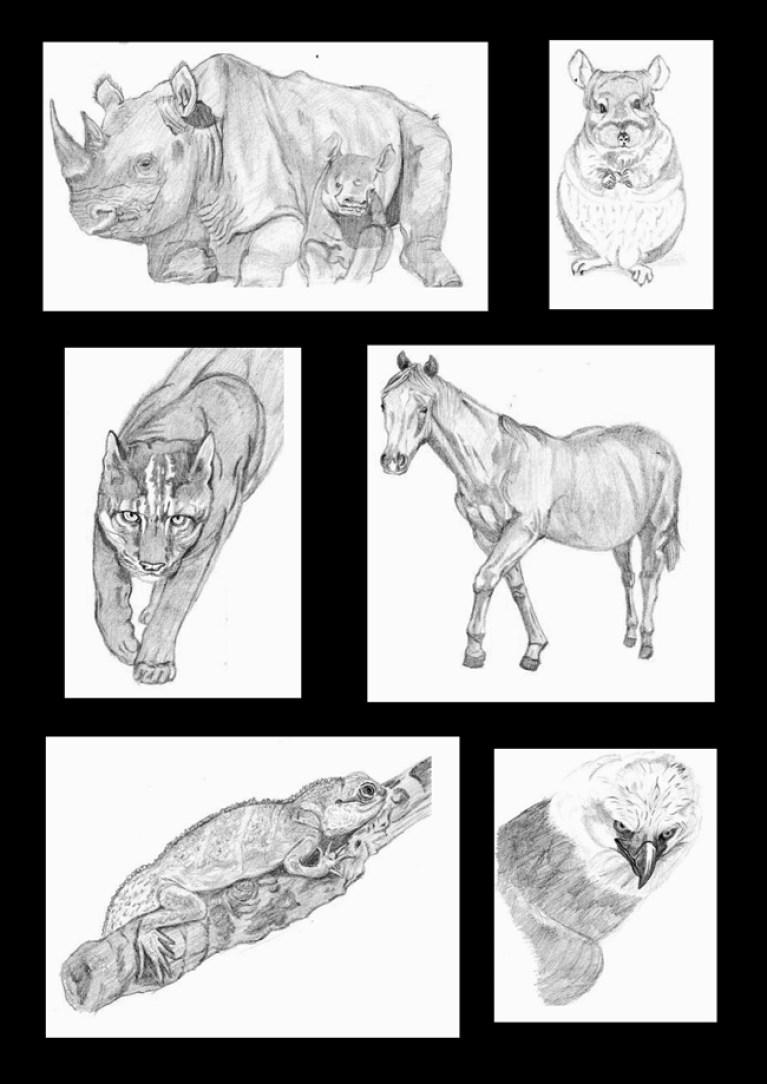 Los animales de Viviana. Alumna de dibujo profesional en Academia C10.