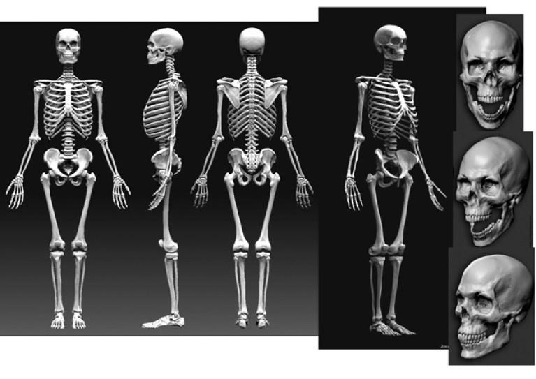 ejercicio-curso-dibujo-profesional-esqueleto-alumnos-trabajos