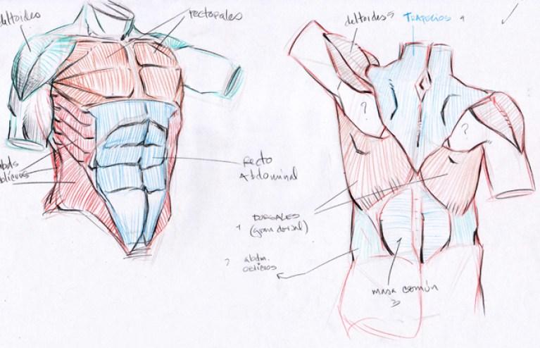 documentacion_anatomia_humana_curso_dibujo_profesional_academiac10_madrid1