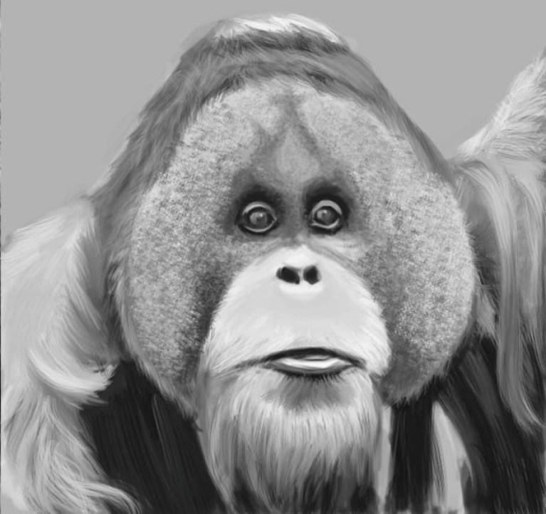 Orangutan.Patrica