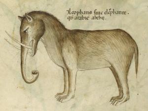 curso-comic-anatomia-animal-humana-dibujo2