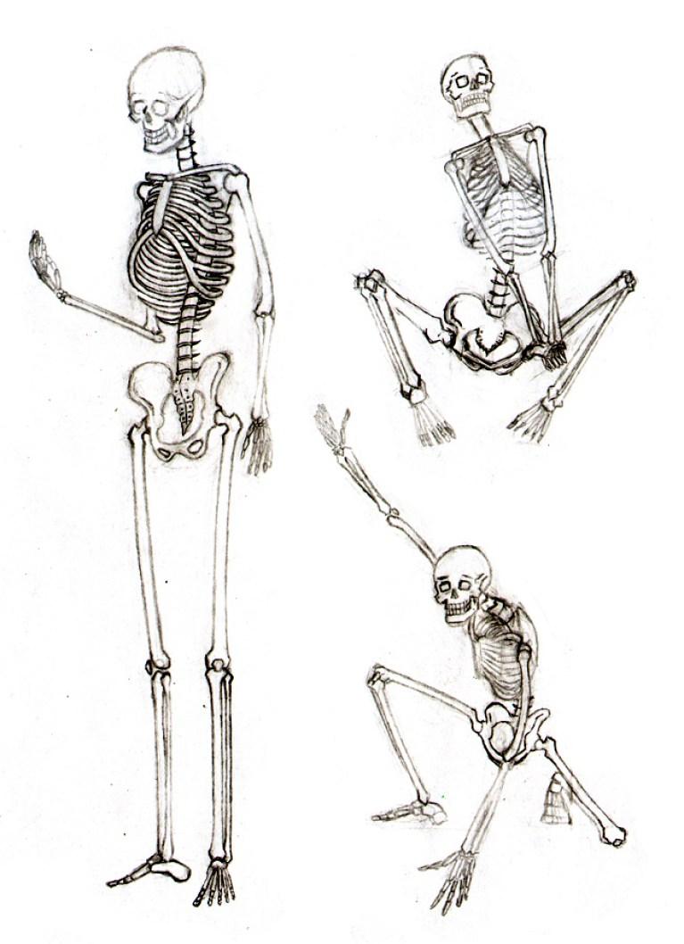 curso_comic_anatomia_huesos_figura_humana_esqueletos
