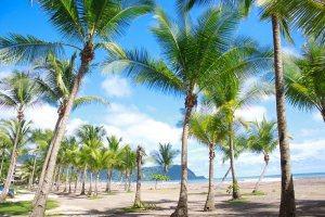 Palm trees in Jacó Beach, Costa Rica