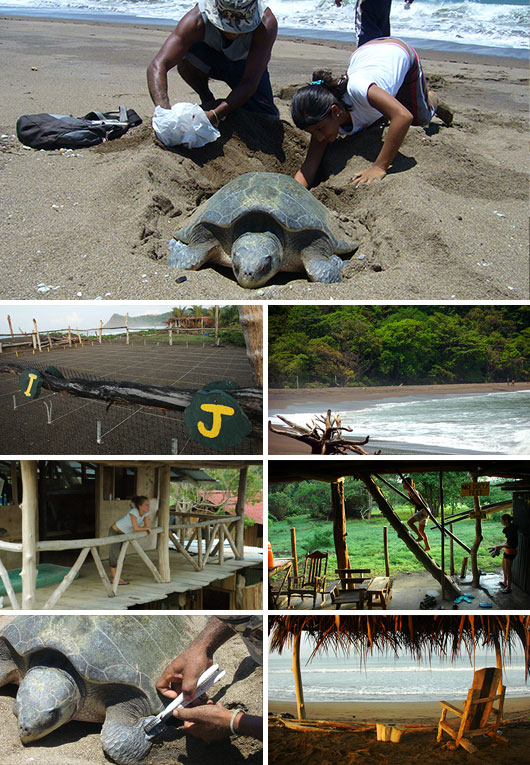 Turtle Protection Program volunteering in Buena Vista, Costa Rica