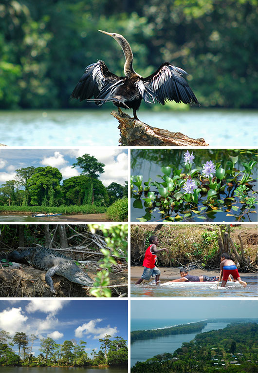 Volunteering in Tortuguero, Costa Rica