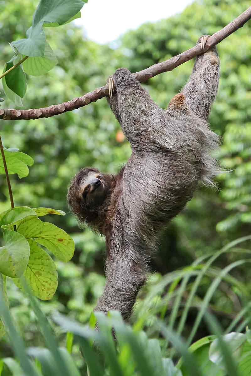 First day survey sloth