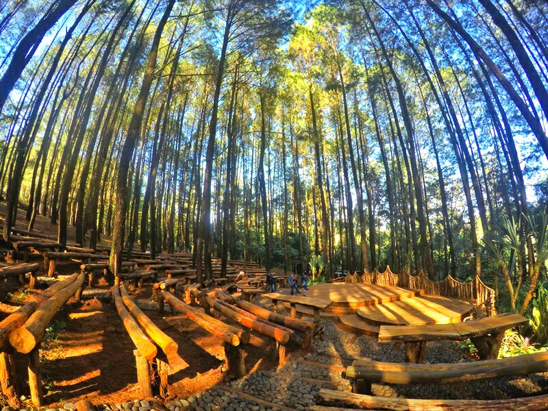 wisata di jogja hutan pinus