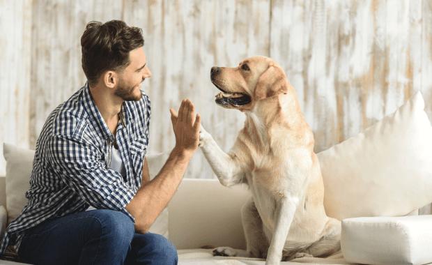 scholarships-for-having-a-dog