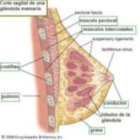 anatomía del pecho. academiestic.