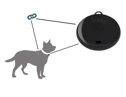 dog-1.jpg?fit=2000%2C1545