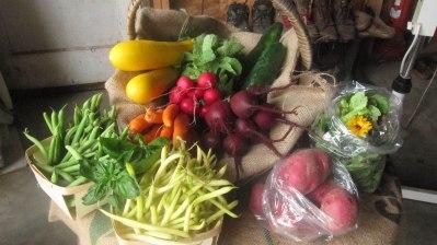 La ferme La Belle Besogne de Néguac offre une quarantaine de légumes différents. - Gracieuseté