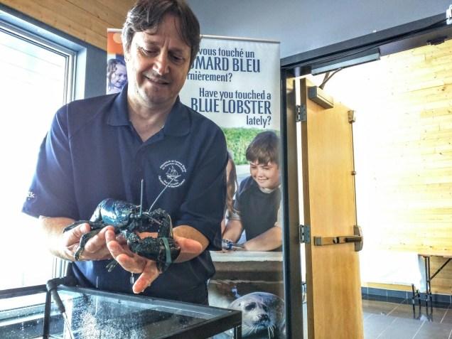 Laurent Robichaud, coordonnateur du développement et de la promotion à l'Aquarium et Centre marin du Nouveau-Brunswick, à Shippagan, espère sensibiliser les visiteurs à l'importance de l'écologie marine. - Acadie Nouvelle: David Caron.