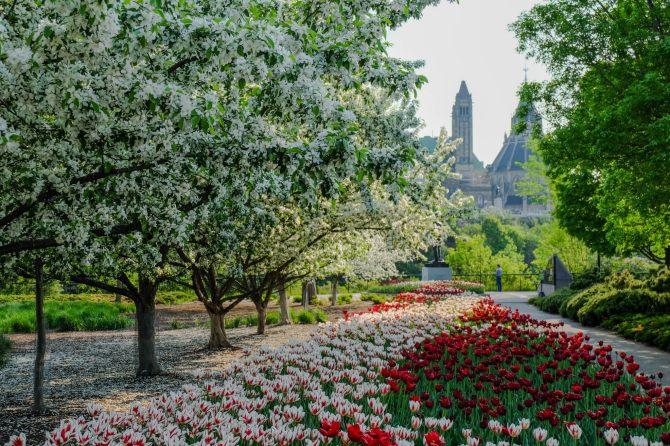 Les couleurs d'Ottawa au printemps. - Gracieuseté
